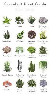 windowsill succulent garden succulents garden garden boxes and