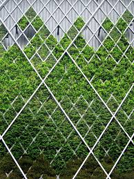 117 best vertical green images on pinterest vertical gardens