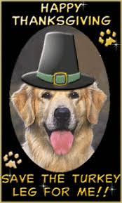 Happy Thanksgiving Funny Images Dog Funny Lol Animation Animations Animated Happy Thanksgiving Gif