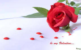 Valentines Day Flowers Beautiful Valentine U0027s Day Flowers Images With Wishes For Him Her