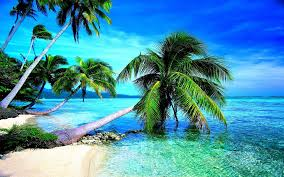 Palm Tree Outdoor Rug Tropical Beach Wallpapers Desktop Wallpaper Cave Images