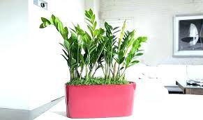 best indoor plants for low light best indoor trees low light best indoor plants for men indoor