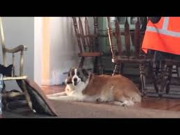 How Do Blind Dogs Know Where To Go Do Dogs Know They U0027re Good Boys