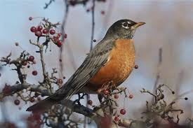 Nj Backyard Birds by Did You Notice Fewer Birds Flew South This Winter Study Blames