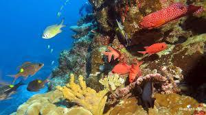 million dollar bommie christmas island in australia u0027s indian ocean