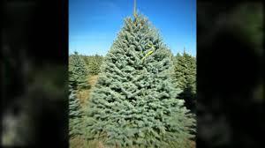 christmas trees indiana pa 15701 814 948 4990 pineton tree