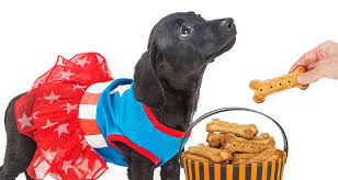 recipe for dog treats recipe ideas for and healthy dog treats cesar s way