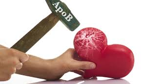 what is apob your heart and the apolipoprotein b test