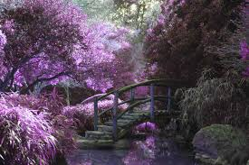 Botanical Garden In Bronx by Fun Fact New York Botanical Garden Yourneighborhood