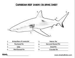labeled diagram of hammerhead shark anatomy body list