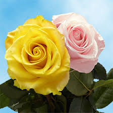 Global Roses Yellow And Pink Roses Delivered In 24 Hours Global Rose