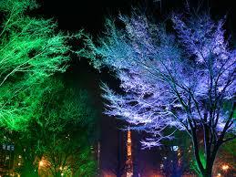 Landscape Lighting Ideas Trees Landscape Tree Lighting Ideas Innovafuer Lighting