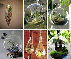 hanging glass terrariums a bubble garden in the sky u2014 roundup