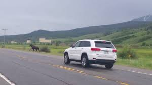 fake jeep meme car hits moose in colorado white river national forest youtube
