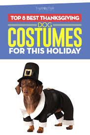 top 8 best thanksgiving costumes for 2017 s season
