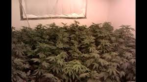 4000 watt grow room youtube