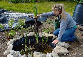 spice up your backyard garden with this small diy wildlife pond