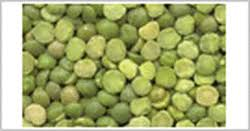 products exporters u0026 importers of lentils and other food grains