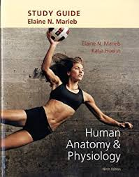 Human Anatomy And Physiology Review Amazon Com Human Anatomy U0026 Physiology Books A La Carte Edition