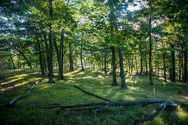 Forest And Waves State Of by Spartan Race Inc Obstacle Course Races Tri State New York