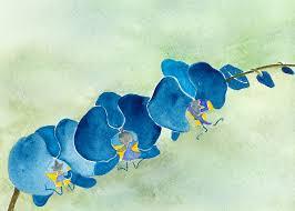 Blue Orchid Flower Watercolor Flower Nova Arts Group