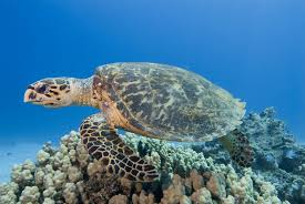 10 fun facts about sea turtles