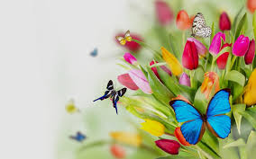 fresh photograph of flowers butterfly pictures butterfly plants list
