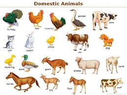 animals pictures with names for kids download