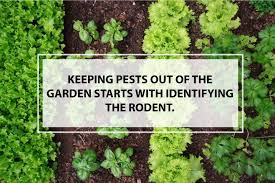 How To Keep Pests Away From Garden - how to keep rodents out of the garden