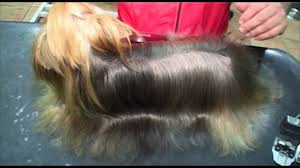 best shampoo for yorkshire terrier youtube