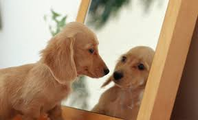 Looking In The Mirror Meme - animals vs mirrors compilation 2013 hd mirror mirror