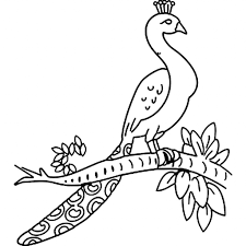 easy peacock drawing 13 pics of easy peacock feather coloring page