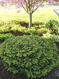 Rock Garden Plants Uk Evergreen Garden Plants Best Zone 3 Shrubs Images On Garden Ideas