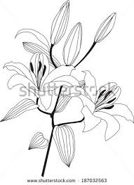 drawn daisy posy flower pencil and in color drawn daisy posy flower