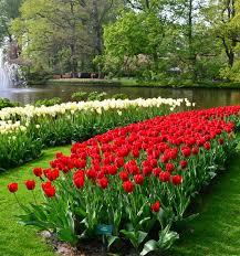 Atlanta Botanical Garden Atlanta Ga Atlanta Botanical Garden Flora Concerts