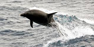 David Phillips Wildfire Credit Union by 30 Dolphins Illegally Captured Returned To Ocean Following Police Raid