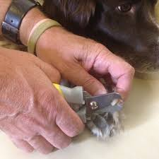 industry professionals render their very top advice on best way to stop biting nails trim pet