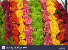 different color roses different color roses all together stock photo royalty free
