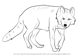 learn how to draw a mexican wolf wild animals step by step
