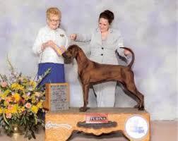 westminster bluetick coonhound 2016 redbone coonhound puppy dog for sale in waldron arkansas