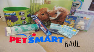 Petsmart Small Animal Cages Small Petsmart Haul Youtube