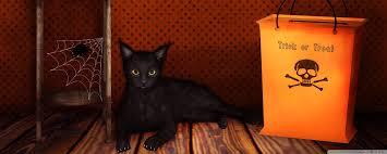halloween cats wallpaper halloween trick or treat hd desktop wallpaper high definition