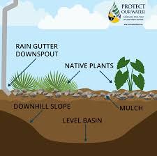 native plants for rain gardens storm water hawaiihow to build a rain garden