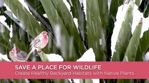 native plant society of new mexico save a place for wildlife create healthy backyard habitats with