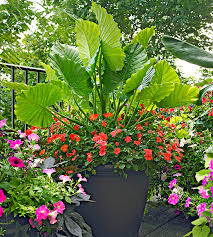 Potted Garden Ideas Garden Design Basics