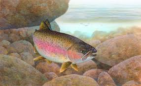 genetic researchers sequence genome of rainbow trout genetics