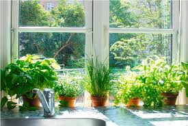 kitchen herb garden indoor u2014 new decoration how to grow indoor