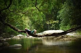 ella jungle resort sri lanka booking