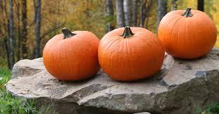 fall pumpkins wallpaper images of fall pumpkins