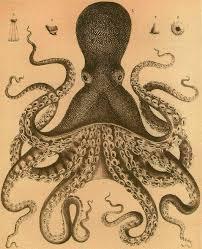 Seeking Octopus Shukernature Globsters Abounding Part 2 Seeking